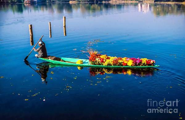 Dal Lake Photograph - Groovy Flowers by Christina Ford