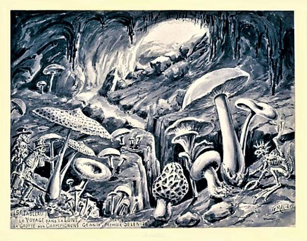 Photograph - Grotto Of Mushrooms On The Moon by Rob Hans