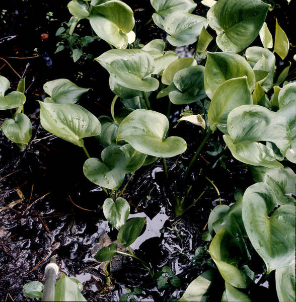 Vertical Landscape Photograph - Ground Cover by Robert Natkin