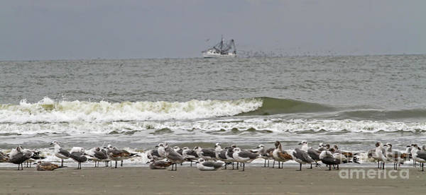 Photograph - Grounded Seagulls 2 by Kevin McCarthy