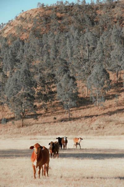Photograph - Group Of Cows by Rob D Imagery