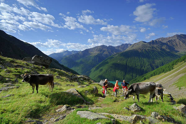 Senior Adult Photograph - Group Of Hikers Descending From Alpine by Andreas Strauss / Look-foto