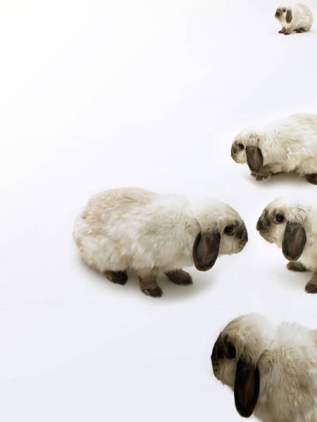 Body Parts Photograph - Group Of Lop-eared Rabbits Against by Michael Blann