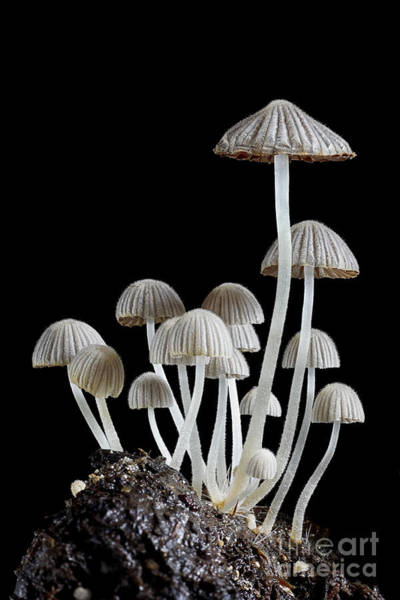 Wall Art - Photograph - Group Of Mushrooms by Igor Kovalenko