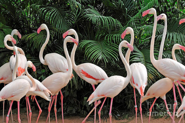 Riverside Wall Art - Photograph - Group Of Pink Flamingos by Panda3800