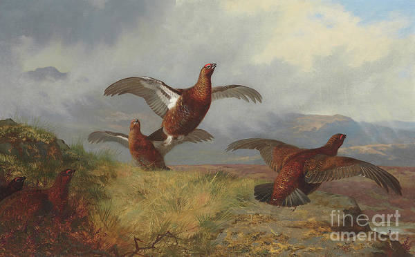 Wall Art - Painting - Grouse In Flight, 1888  by Archibald Thorburn