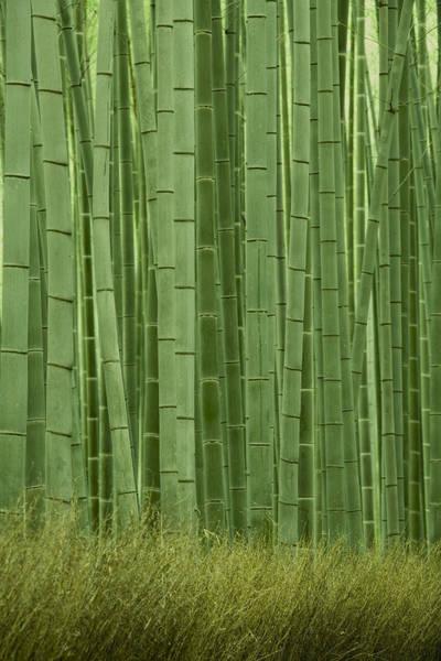 Boundaries Wall Art - Photograph - Grove Of Bamboo Trees Phyllostachys by Akira Kaede