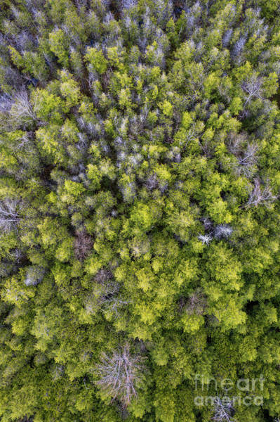 Wall Art - Photograph - Grove Of Pines Aerial by Twenty Two North Photography
