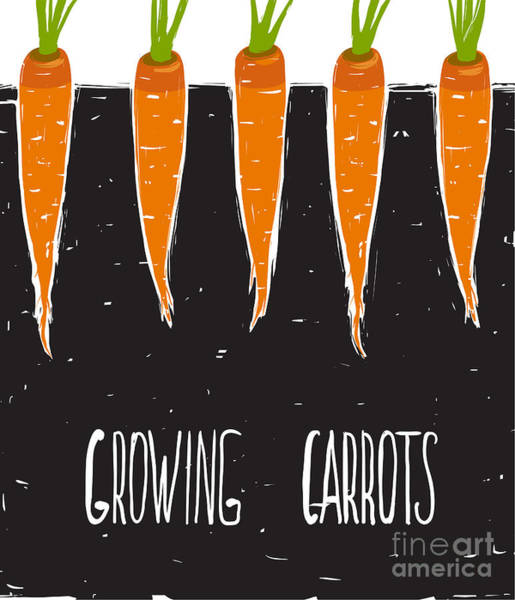 Bed Wall Art - Digital Art - Growing Carrots Freehand Drawing And by Popmarleo