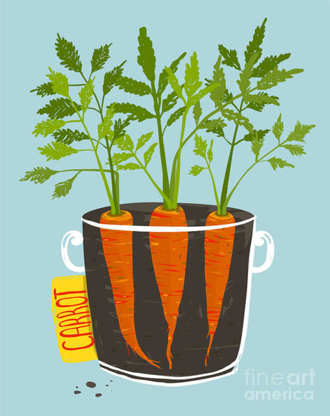 Raw Wall Art - Digital Art - Growing Carrots With Green Leafy Top In by Popmarleo