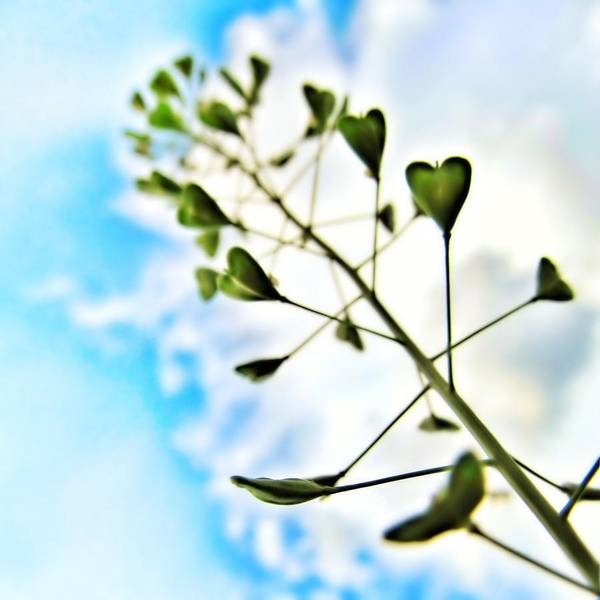 Photograph - Growing Love by Marianna Mills