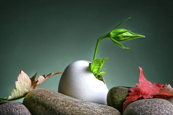 Wall Art - Photograph - Growing New Life by Photographer Of The Year 2007,2008