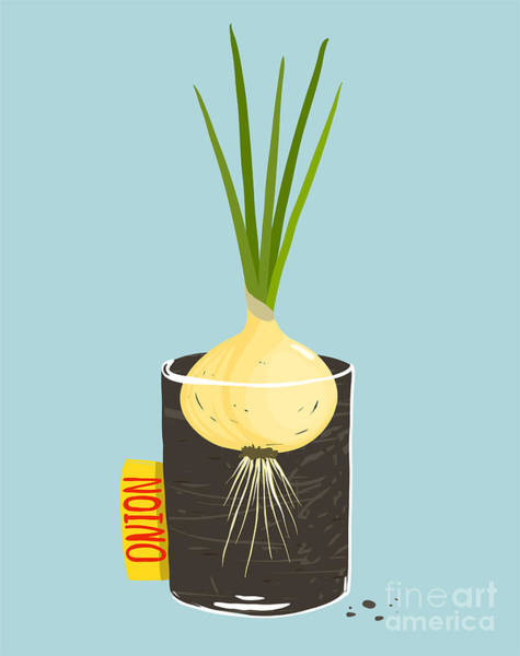 Wall Art - Digital Art - Growing Onion With Green Leafy Top In by Popmarleo