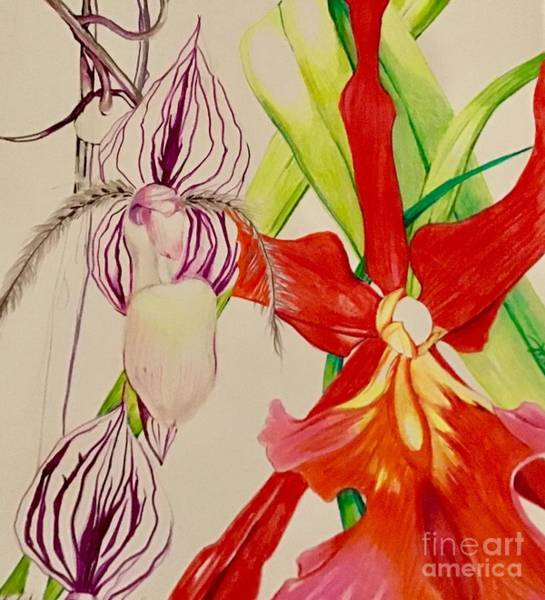 Drawing - Growing Orchids by Laurel Adams