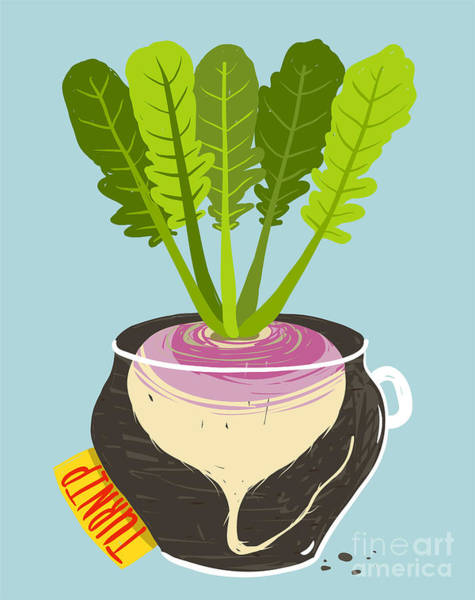 Organic Garden Wall Art - Digital Art - Growing Turnip With Green Leafy Top In by Popmarleo