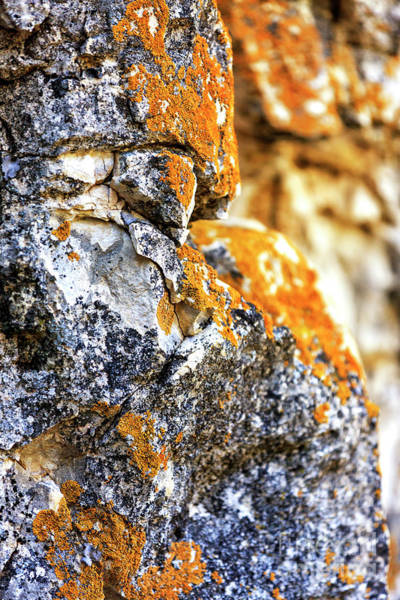 Photograph - Growth At Walnut Canyon National Monument by John Rizzuto