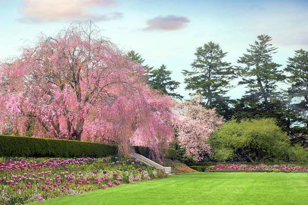 Wall Art - Photograph - Weeping Cherry And Tulips by Jessica Jenney