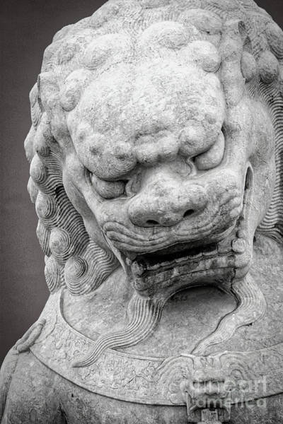 Wall Art - Photograph - Guardian Foo Dog - Black And White by Carol Groenen