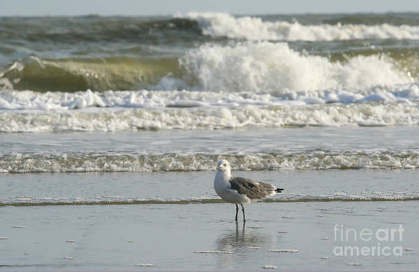 Photograph - Guardian Of The Surf by Kevin McCarthy