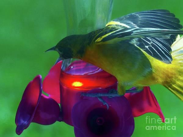 Photograph - Guarding The Nectar by Rosanne Licciardi
