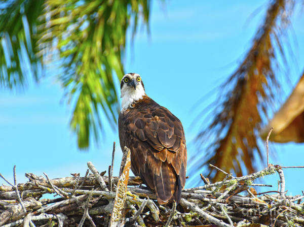 Photograph - Guarding The Nest by Christine Dekkers