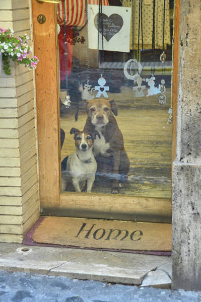 Photograph - Guarding The Shop by JAMART Photography