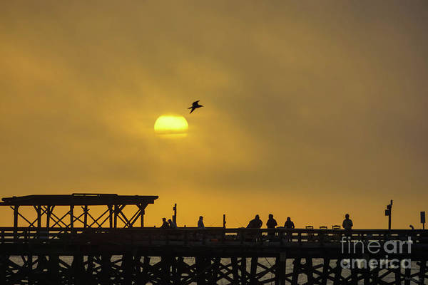 Wall Art - Photograph - Gull Silhouette Flyby by Jennifer White