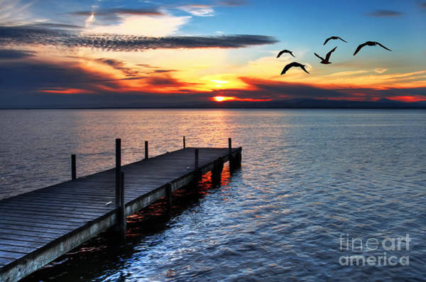 Wall Art - Photograph - Gulls Fly Over The Sea by Kesipun