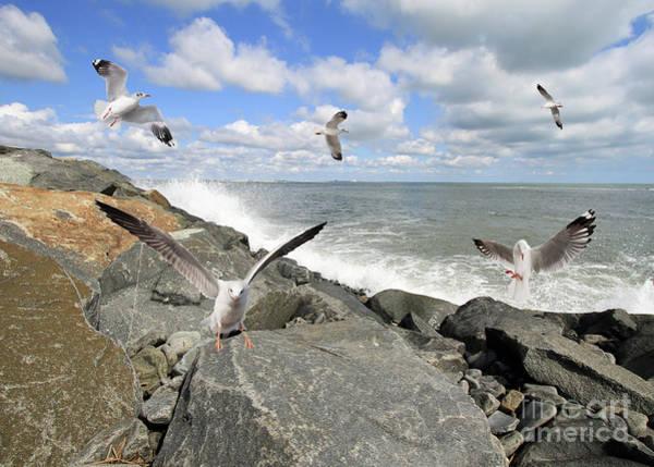 Photograph - Gulls In Flight by Geoff Crego