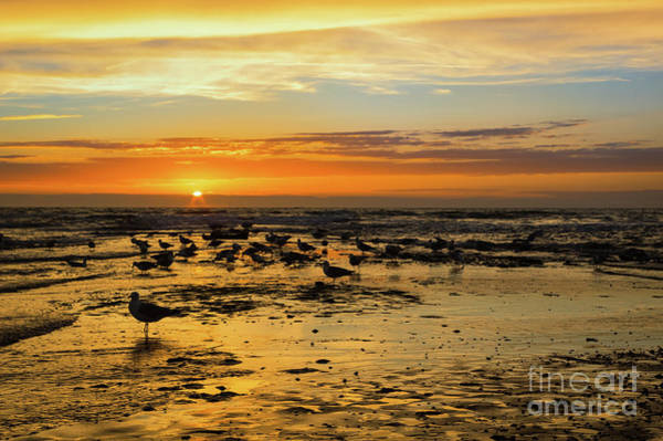 Photograph - Gulls In The Sunset by Angela Doelling AD DESIGN Photo and PhotoArt