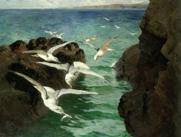 Wall Art - Painting - Gulls, St Ives Bay by William Holt Yates Titcomb