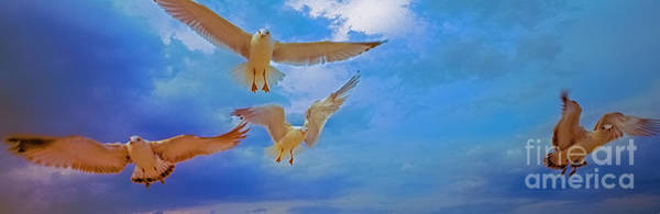 Photograph - Gulls, Stop, Action,  by Tom Jelen