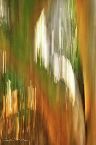 Wall Art - Photograph - Gumbo Limbo Abstract by Kathi Isserman