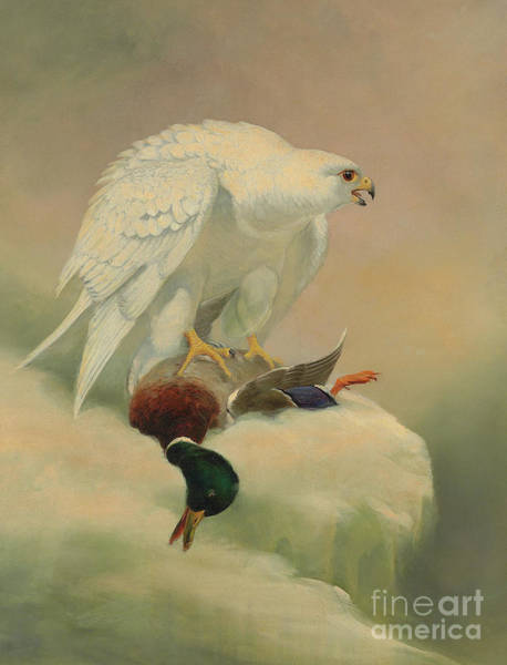 Wall Art - Painting - Gyrfalcon And Mallard  by Joseph Wolf