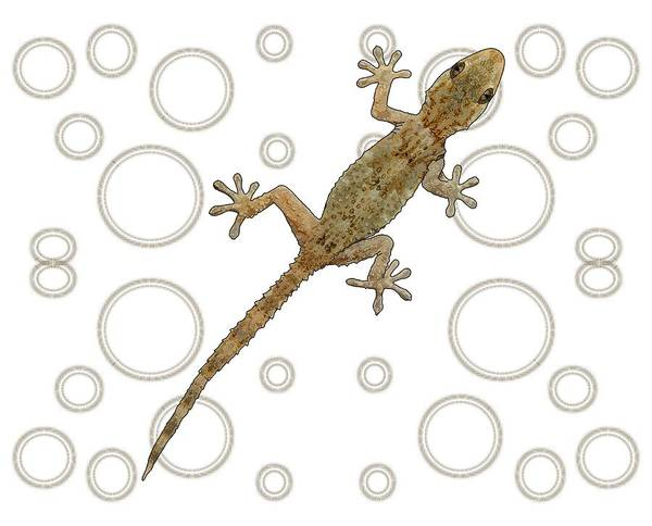 Drawing - H Is For House Gecko by Joan Stratton