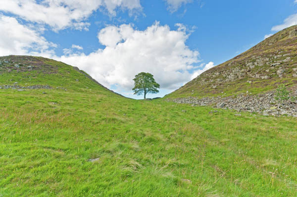 Roman Wall Photograph - Hadrians Wall Robin Hood Tree by Alphotographic