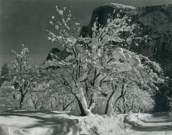 Nature Photograph - Half Dome, Apple Orchard, Yosemite by Archive Photos