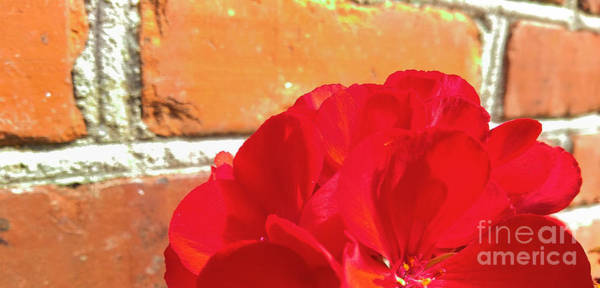 Photograph - Half On A Red by Robert Knight