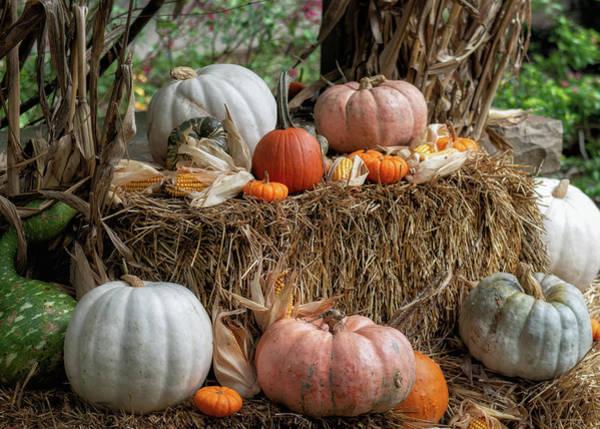 Pumkin Wall Art - Photograph - Halloween Decor by James Barber