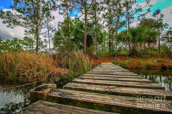 Photograph - Halpatiokee Footbridge by Tom Claud