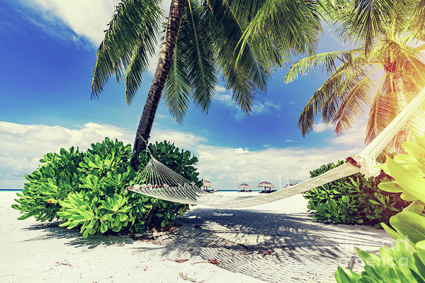 Photograph - Hammock And Palms On The Beach. by Michal Bednarek
