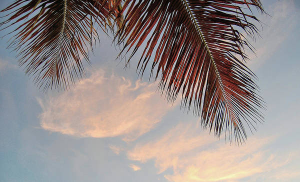 Photograph - Hammock View by JAMART Photography