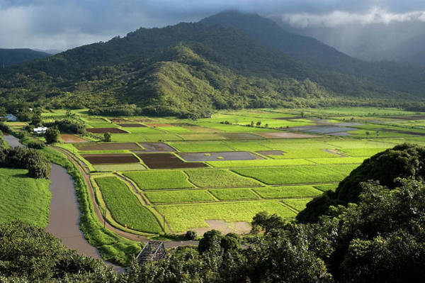 Awe Photograph - Hanalei Valley With Taro Fields Below by John Elk Iii