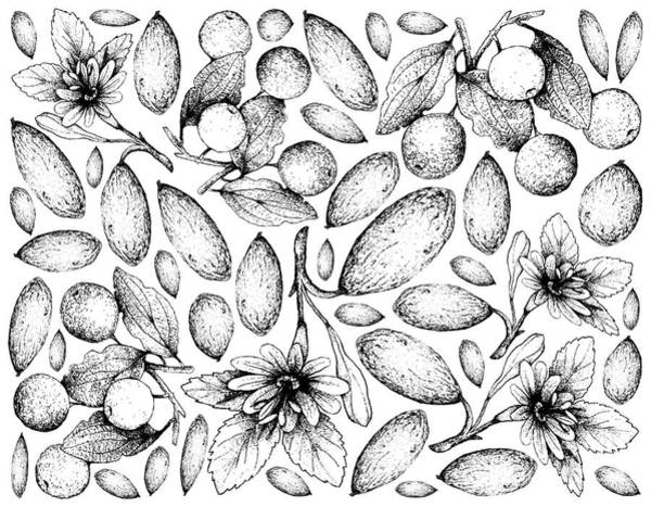 Castilla Drawing - Hand Drawn Background Of Banana Passionfruit And Buffalo Thorn Fruits by Iam Nee