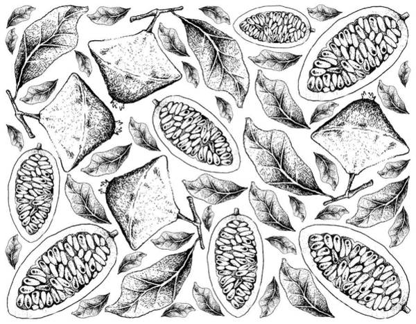 Castilla Drawing - Hand Drawn Background Of Cambuci And Banana Passionfruit by Iam Nee