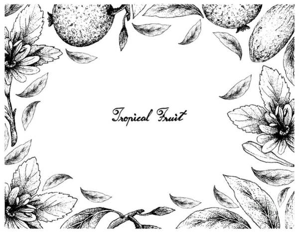 Castilla Drawing - Hand Drawn Frame Of Borojo And Banana Passionfruit by Iam Nee