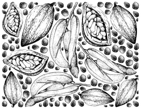 Juicy Drawing - Hand Drawn Of Dead Man's Fingers And Theobroma Cacao Fruits by Iam Nee