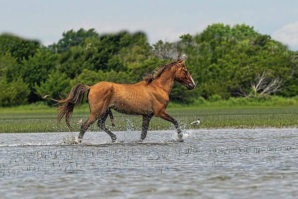 Photograph - Handsome Stallion Splashing Through The Water by Dan Friend