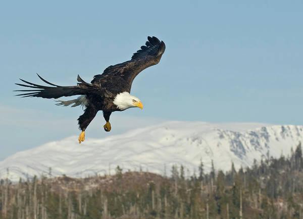 Bald Mountain Photograph - Hang Gliding by Image By David G Hemmings