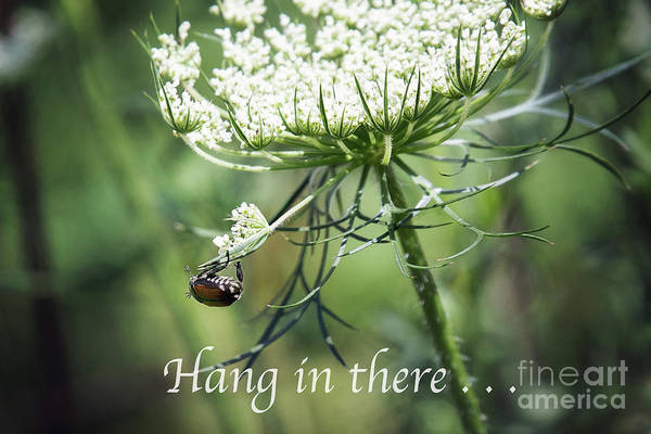 Wall Art - Photograph - Hang In There by Sharon McConnell